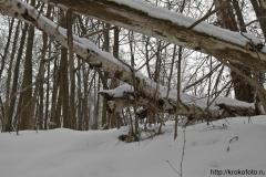 зимние пейзажи 104