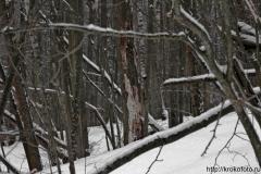 зимние пейзажи 105