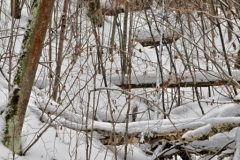 зимние пейзажи 106