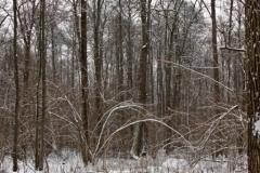 зимние пейзажи 107