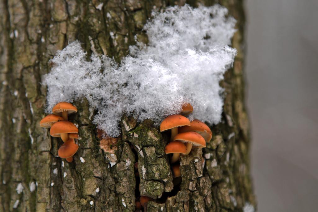 цвета в лесу